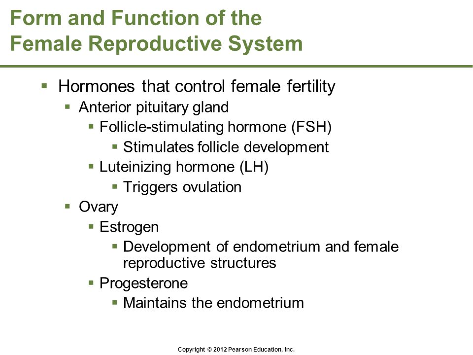 Copyright © 2012 Pearson Education, Inc. Form and Function of the Female Reproductive System  Hormones that control female fertility  Anterior pitui