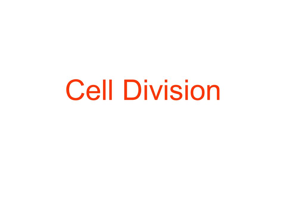 Cell division – parent cell divides into 2 daughter cells 2 types of cell division: 1) mitosis – division of somatic (body) cell to produce identical somatic cells -occurs in a series of phases