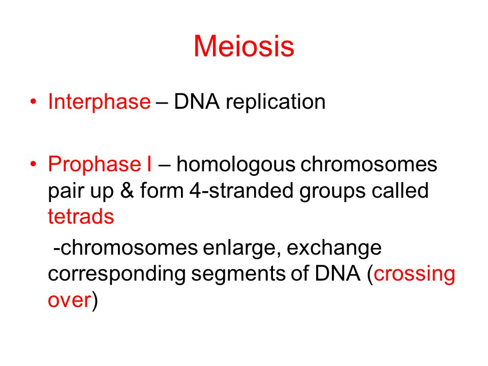 Meiosis Interphase – DNA replication Prophase I – homologous chromosomes pair up & form 4-stranded groups called tetrads -chromosomes enlarge, exchang