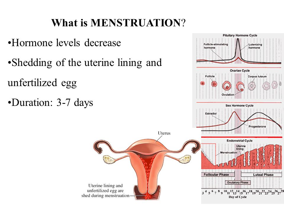 What is MENSTRUATION? Hormone levels decrease Shedding of the uterine lining and unfertilized egg Duration: 3-7 days