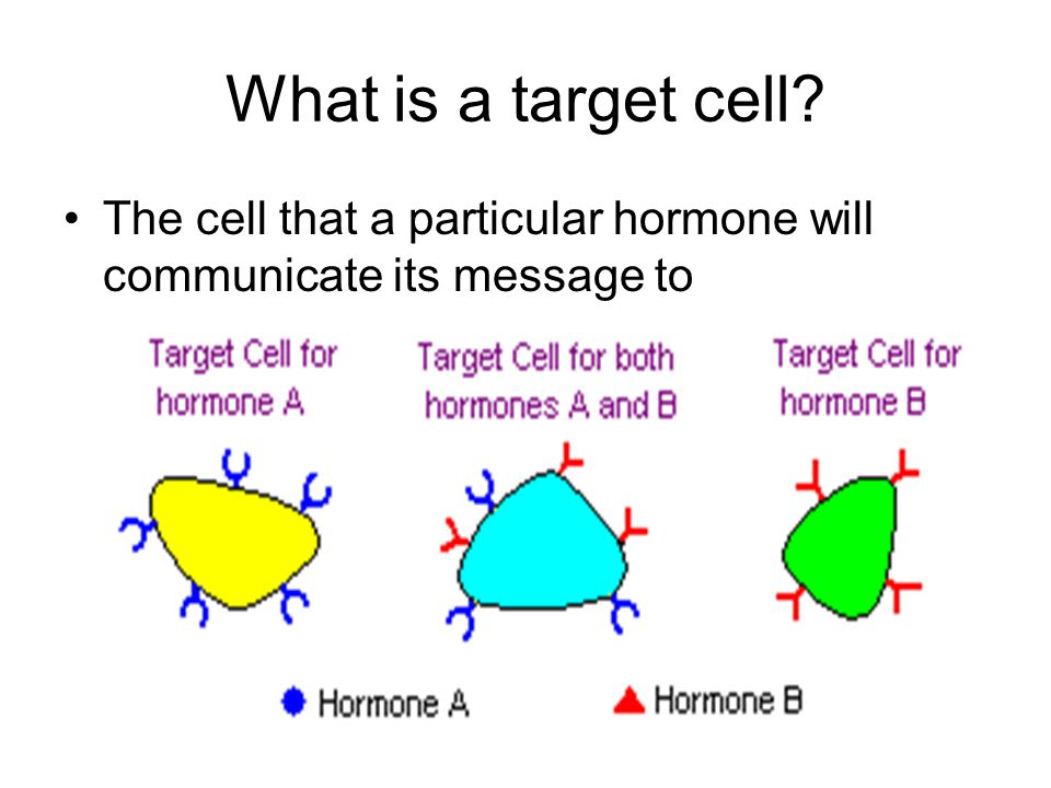 What is a target cell? The cell that a particular hormone will communicate its message to