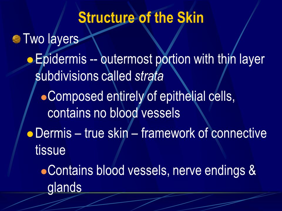 Other Activities of Skin Absorption of medications -- topical creams & patches & subcutaneous injections Excretion of water & electrolyte salts in perspiration & nitrogen-containing wastes Manufacture of Vitamin D from ultra-violet sunlight rays No breathing or gas exchange occurs