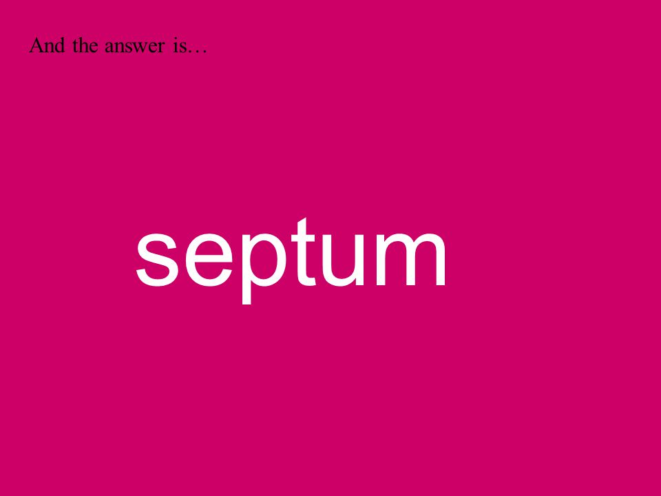 And the answer is… septum