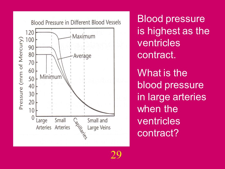 29 Blood pressure is highest as the ventricles contract.