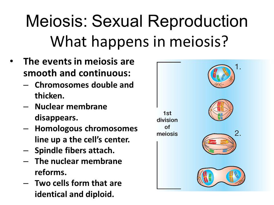 What happens in meiosis.