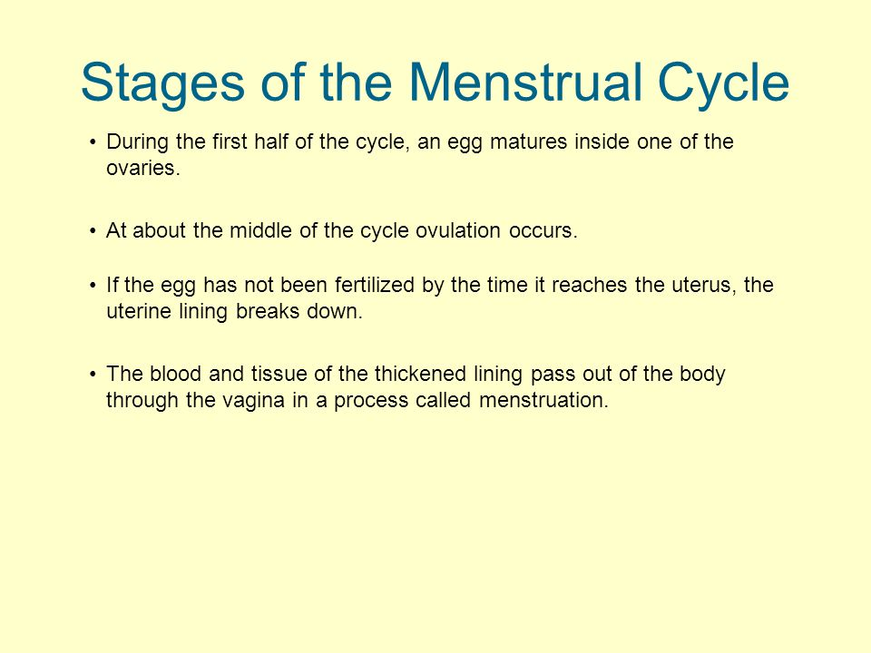 During the first half of the cycle, an egg matures inside one of the ovaries. Stages of the Menstrual Cycle At about the middle of the cycle ovulation