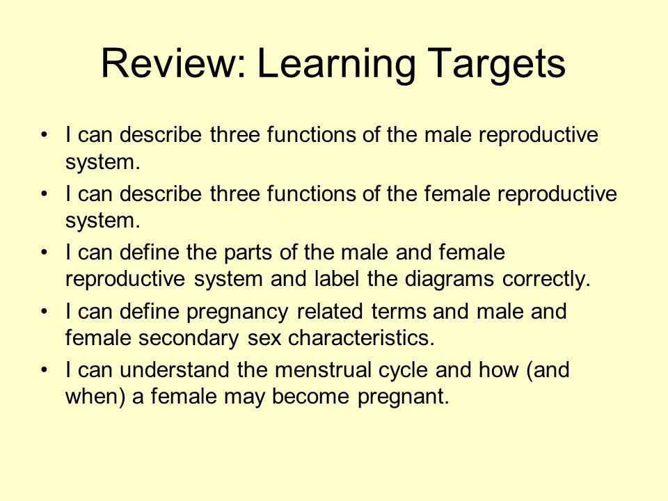 Review: Learning Targets I can describe three functions of the male reproductive system. I can describe three functions of the female reproductive sys