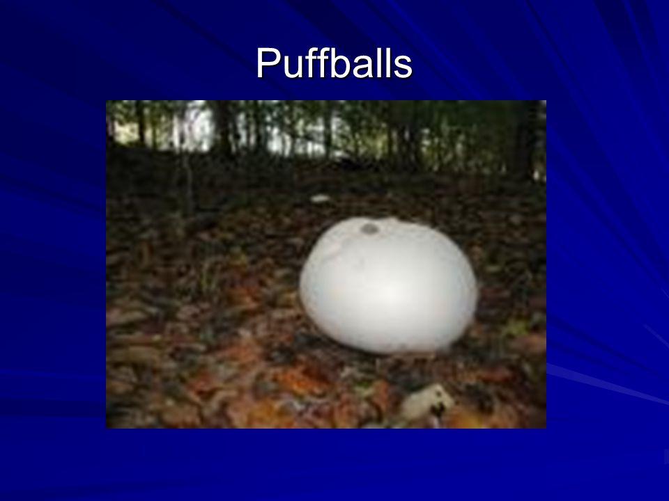 Puffballs