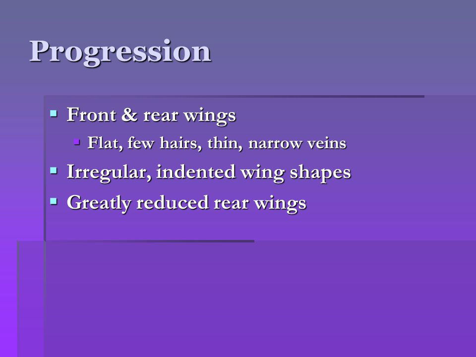 Progression  Smaller front wings  Develop a heavier texture  Veins thicken  Rear wings vanish  Odd shaped front wings  Could be covered with spines