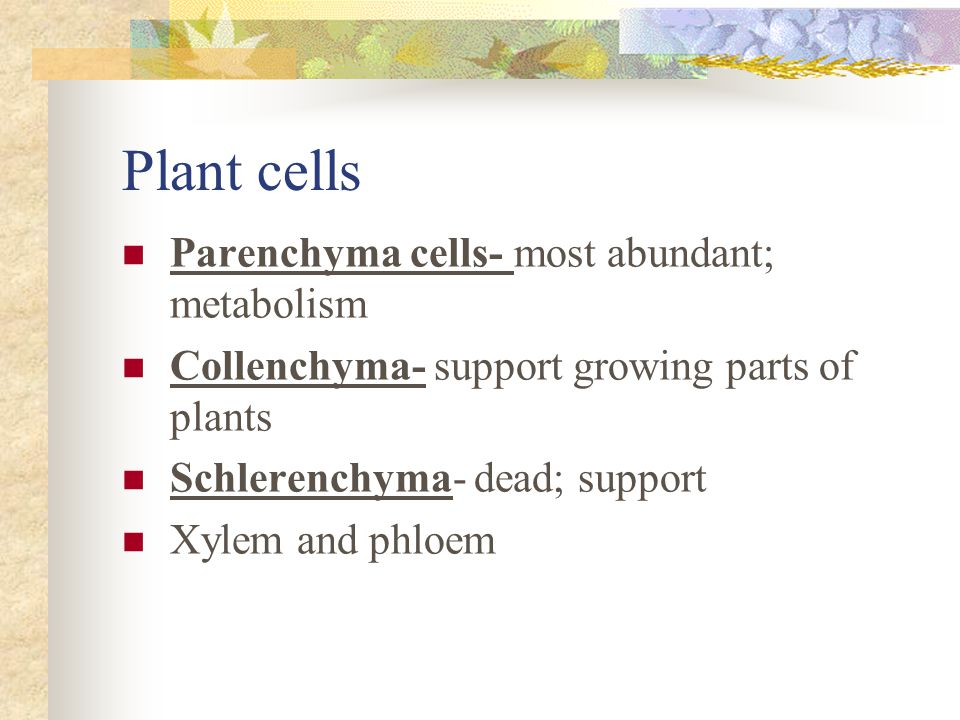 Plant tissues Roots, stems, and leaves needed to live on land.