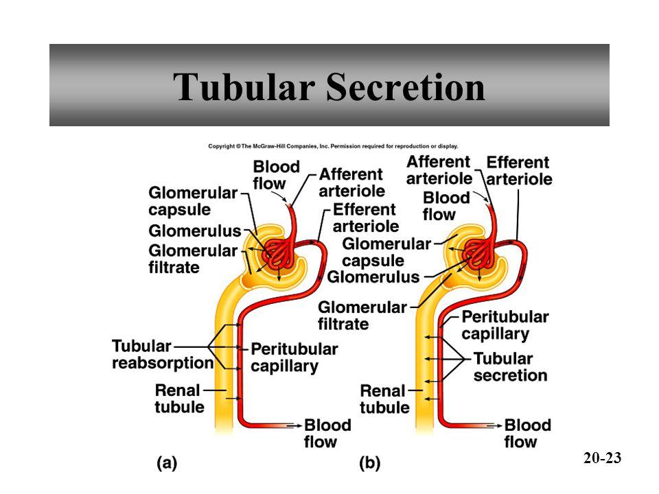 Tubular Secretion 20-23