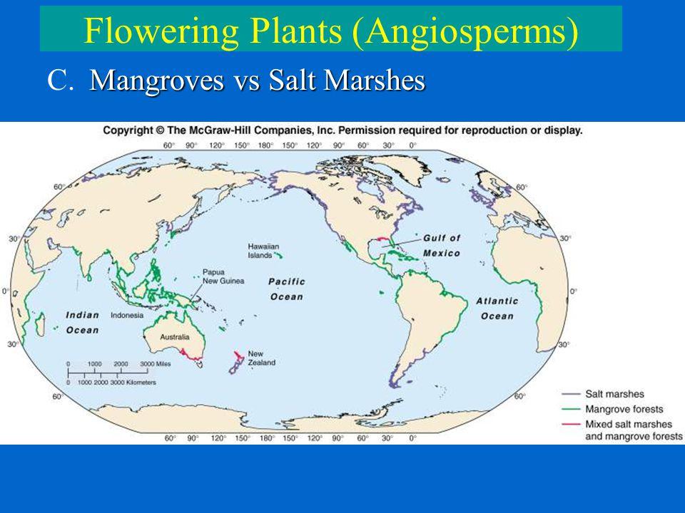 Flowering Plants (Angiosperms) Mangroves vs Salt Marshes C. Mangroves vs Salt Marshes