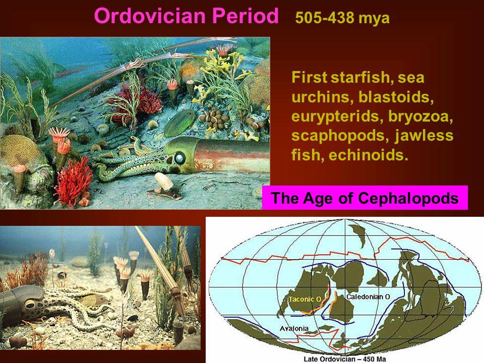 Ordovician Period 505-438 mya First starfish, sea urchins, blastoids, eurypterids, bryozoa, scaphopods, jawless fish, echinoids.