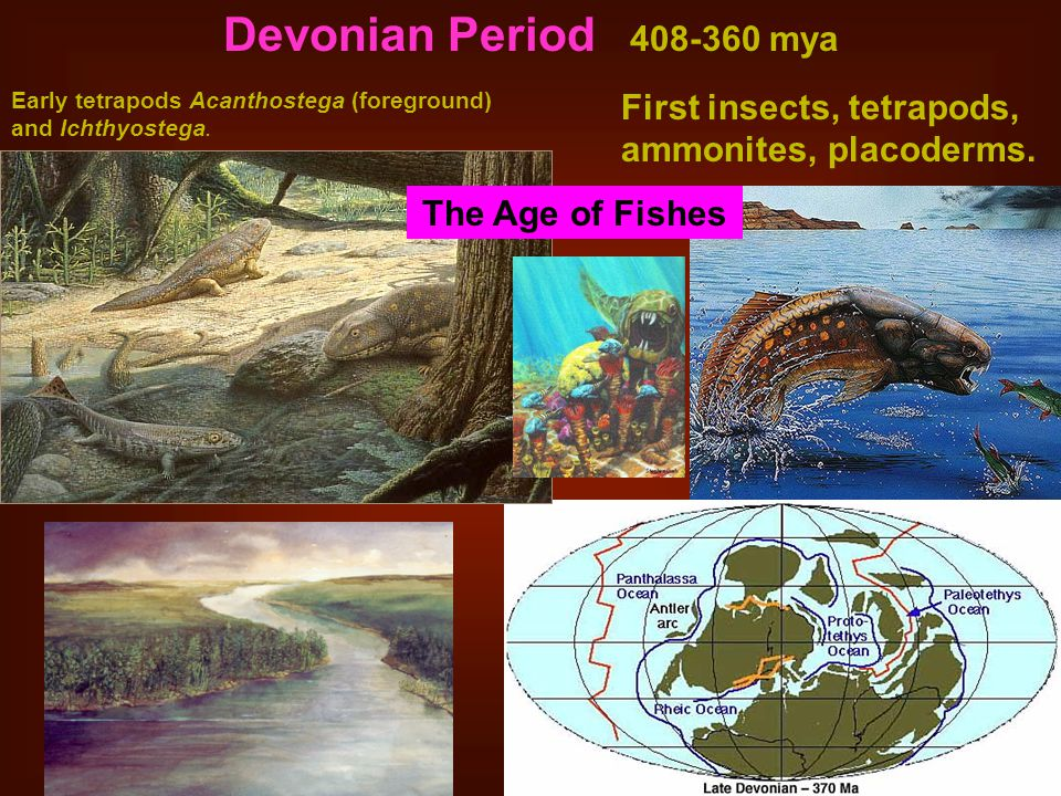 Devonian Period 408-360 mya First insects, tetrapods, ammonites, placoderms.