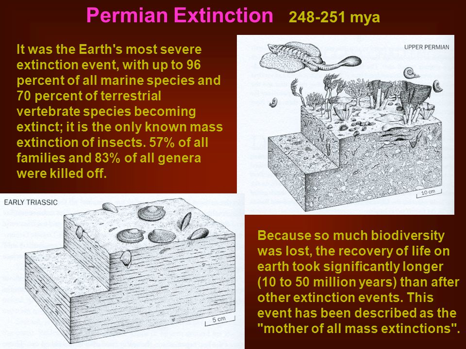 Permian Extinction 248-251 mya It was the Earth s most severe extinction event, with up to 96 percent of all marine species and 70 percent of terrestrial vertebrate species becoming extinct; it is the only known mass extinction of insects.