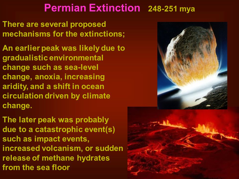 Permian Extinction 248-251 mya There are several proposed mechanisms for the extinctions; An earlier peak was likely due to gradualistic environmental change such as sea-level change, anoxia, increasing aridity, and a shift in ocean circulation driven by climate change.