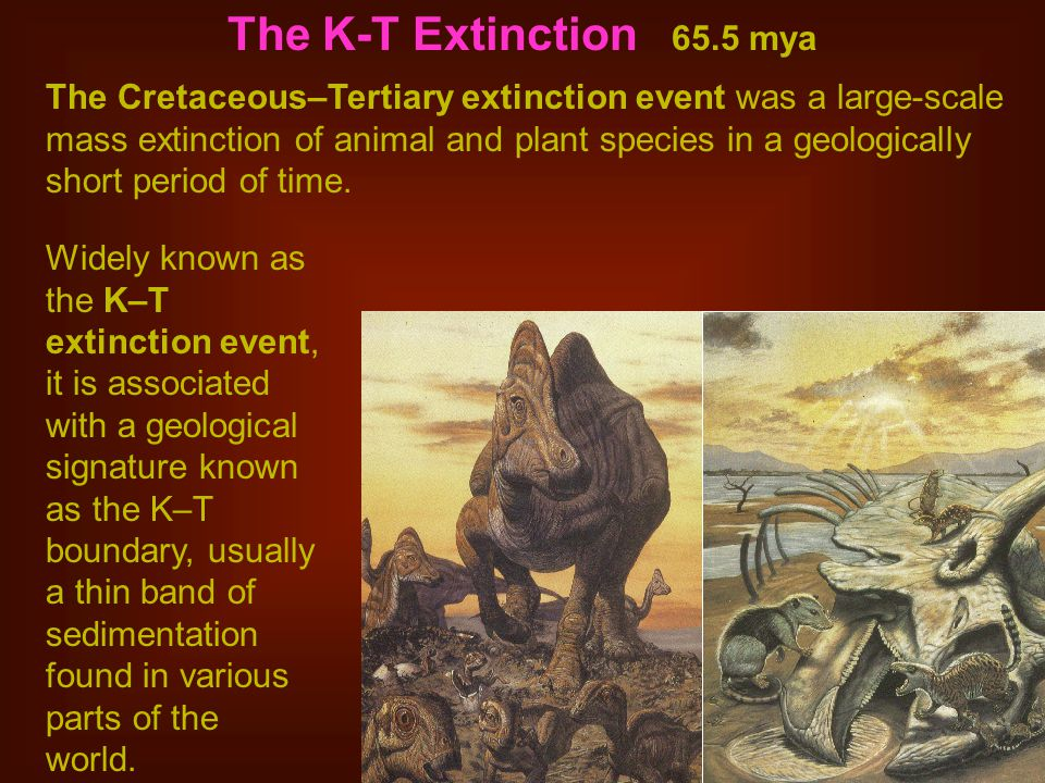 The K-T Extinction 65.5 mya The Cretaceous–Tertiary extinction event was a large-scale mass extinction of animal and plant species in a geologically short period of time.
