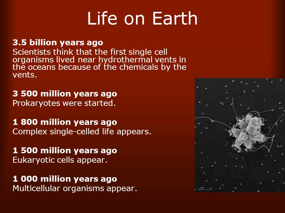 Life on Earth 3.5 billion years ago Scientists think that the first single cell organisms lived near hydrothermal vents in the oceans because of the chemicals by the vents.