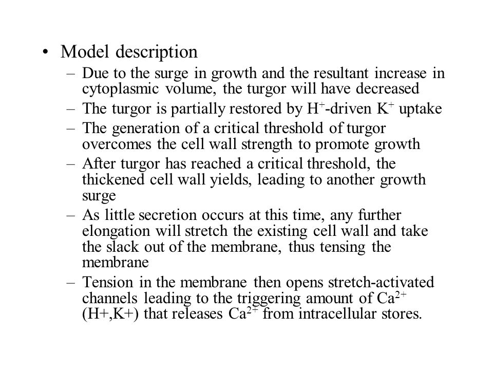 Model description –Due to the surge in growth and the resultant increase in cytoplasmic volume, the turgor will have decreased –The turgor is partially restored by H + -driven K + uptake –The generation of a critical threshold of turgor overcomes the cell wall strength to promote growth –After turgor has reached a critical threshold, the thickened cell wall yields, leading to another growth surge –As little secretion occurs at this time, any further elongation will stretch the existing cell wall and take the slack out of the membrane, thus tensing the membrane –Tension in the membrane then opens stretch-activated channels leading to the triggering amount of Ca 2+ (H+,K+) that releases Ca 2+ from intracellular stores.