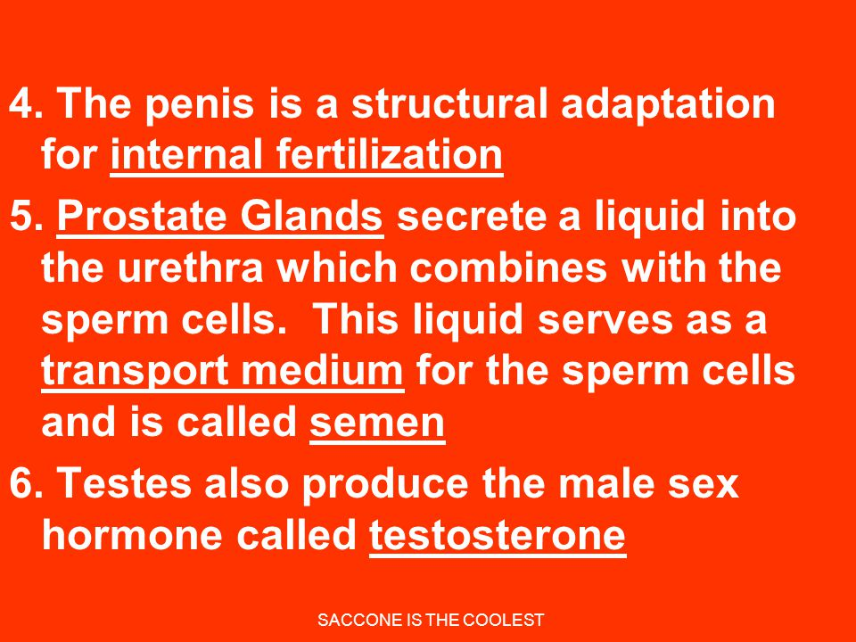SACCONE IS THE COOLEST (A) Testes Are the male gonads 1.