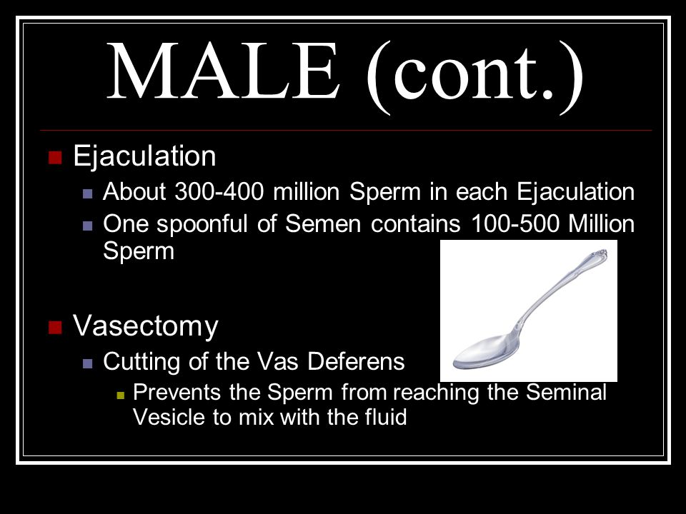 MALE (cont.) Ejaculation About 300-400 million Sperm in each Ejaculation One spoonful of Semen contains 100-500 Million Sperm Vasectomy Cutting of the