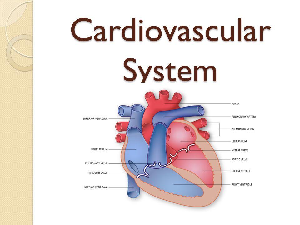 Cardiovascular System Health