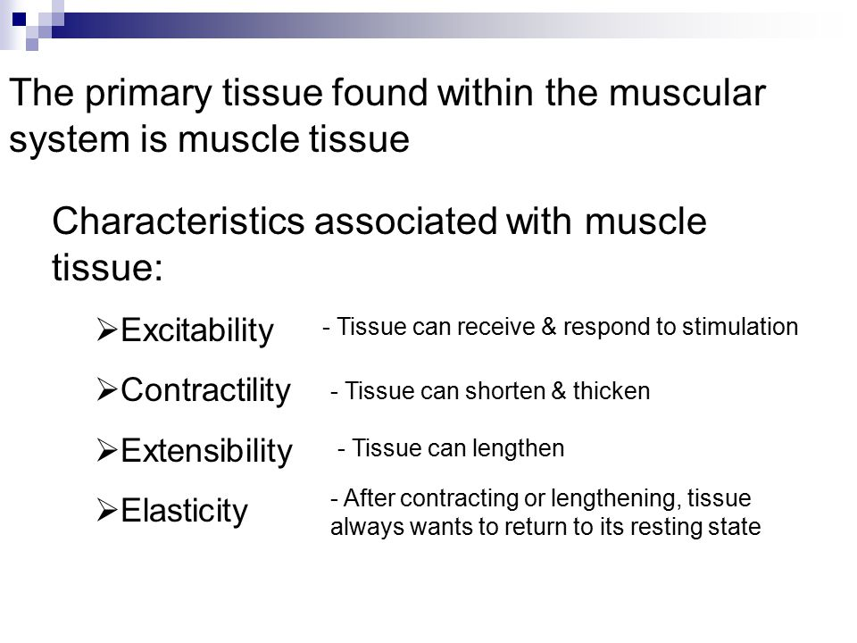 Characteristics associated with muscle tissue:  Excitability  Contractility  Extensibility  Elasticity - Tissue can receive & respond to stimulati