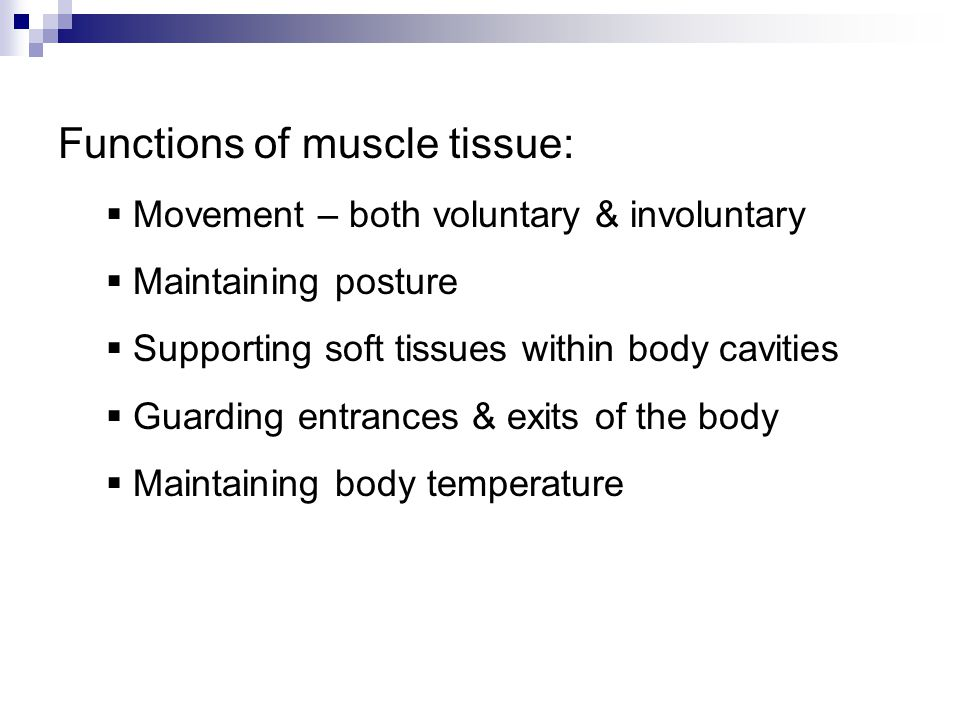 Functions of muscle tissue:  Movement – both voluntary & involuntary  Maintaining posture  Supporting soft tissues within body cavities  Guarding