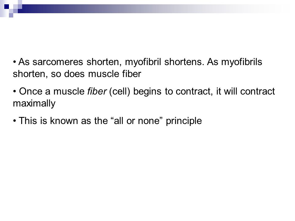 As sarcomeres shorten, myofibril shortens. As myofibrils shorten, so does muscle fiber Once a muscle fiber (cell) begins to contract, it will contract