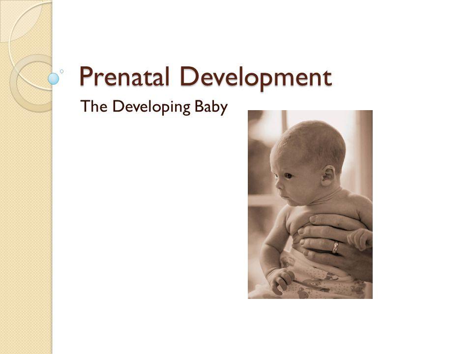 Conception The process of the sperm fertilizing the ovum. ◦ Sperm- male cell ◦ Ovum- women egg cell
