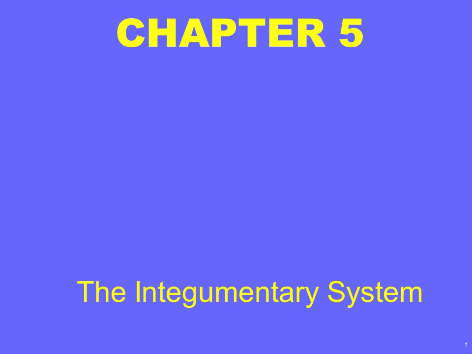 1 CHAPTER 5 The Integumentary System