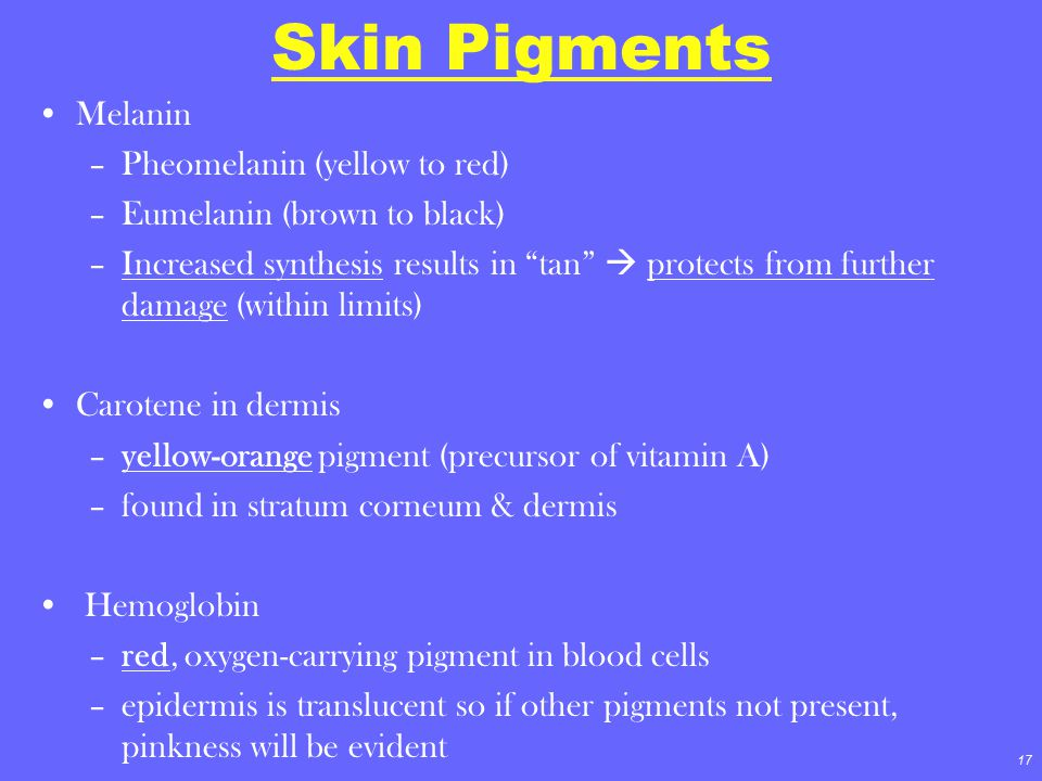 """17 Skin Pigments Melanin –Pheomelanin (yellow to red) –Eumelanin (brown to black) –Increased synthesis results in """"tan""""  protects from further damage"""