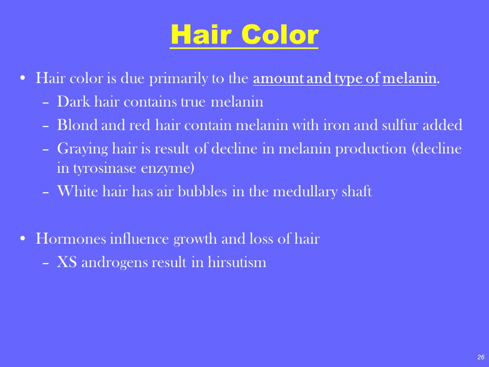 26 Hair Color Hair color is due primarily to the amount and type of melanin. –Dark hair contains true melanin –Blond and red hair contain melanin with