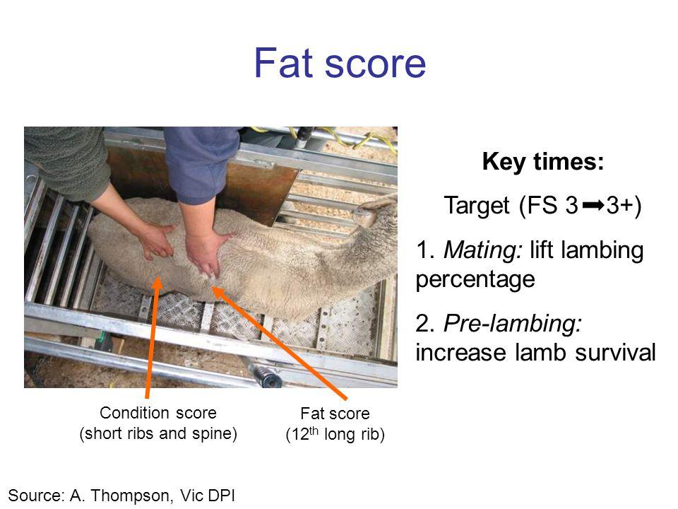 Fat score Condition score (short ribs and spine) Fat score (12 th long rib) Key times: Target (FS 3 3+) 1. Mating: lift lambing percentage 2. Pre-lamb