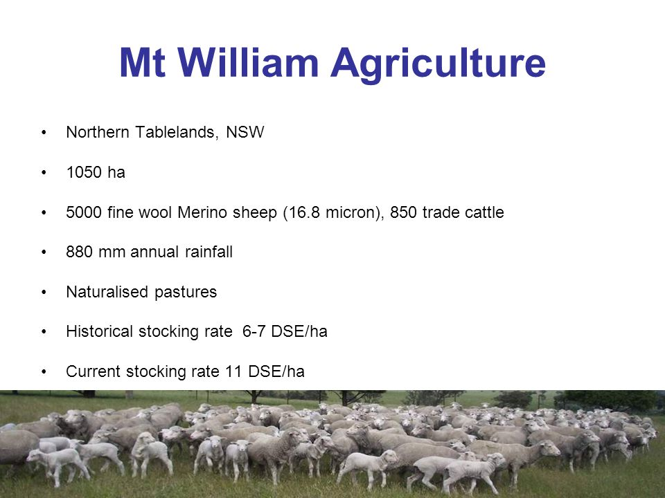 Mt William Agriculture Northern Tablelands, NSW 1050 ha 5000 fine wool Merino sheep (16.8 micron), 850 trade cattle 880 mm annual rainfall Naturalised pastures Historical stocking rate 6-7 DSE/ha Current stocking rate 11 DSE/ha