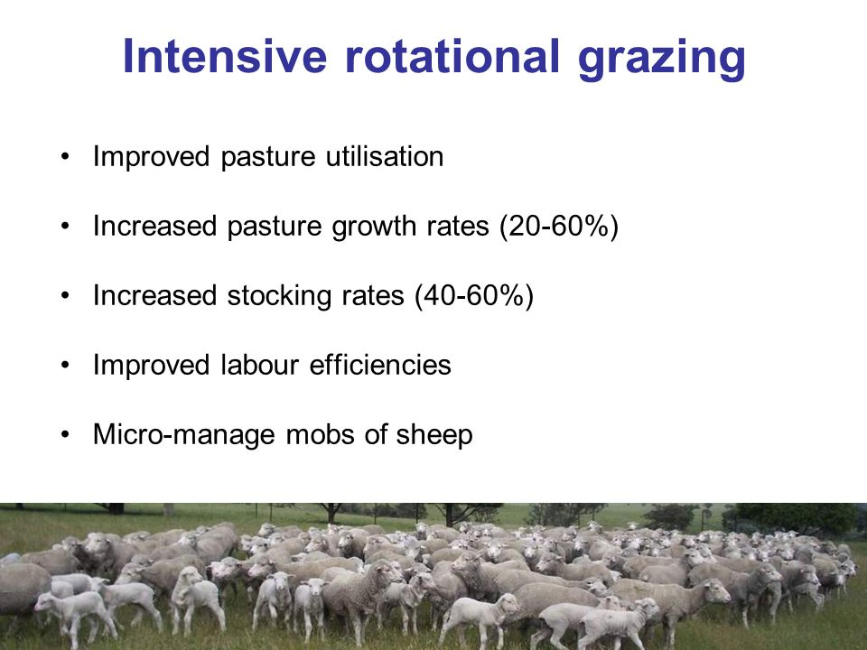 Improved pasture utilisation Increased pasture growth rates (20-60%) Increased stocking rates (40-60%) Improved labour efficiencies Micro-manage mobs of sheep Intensive rotational grazing