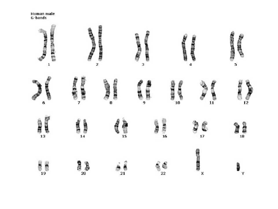 This process of replication results in two identical sister chromatids.