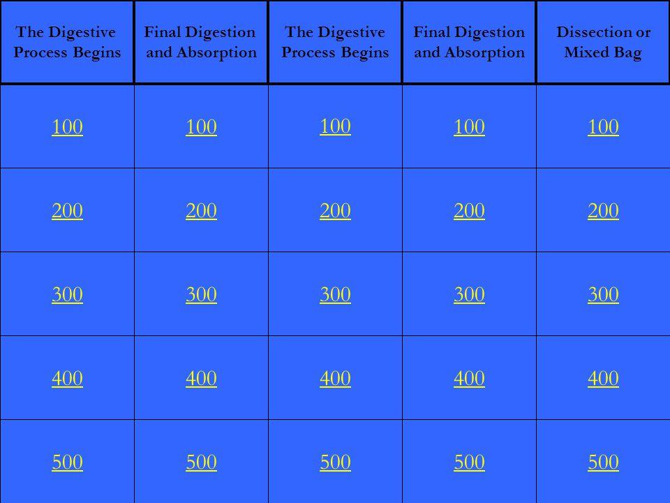 FINAL JEOPARDY The Digestive System