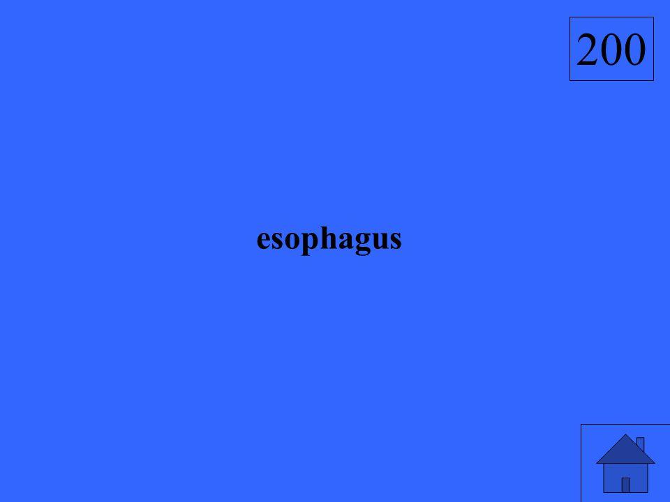 esophagus 200