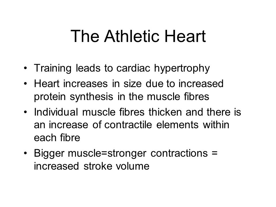 The Athletic Heart Training leads to cardiac hypertrophy Heart increases in size due to increased protein synthesis in the muscle fibres Individual muscle fibres thicken and there is an increase of contractile elements within each fibre Bigger muscle=stronger contractions = increased stroke volume