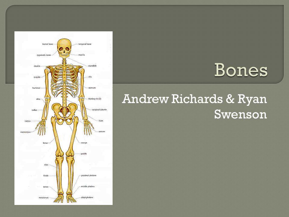 Andrew Richards & Ryan Swenson