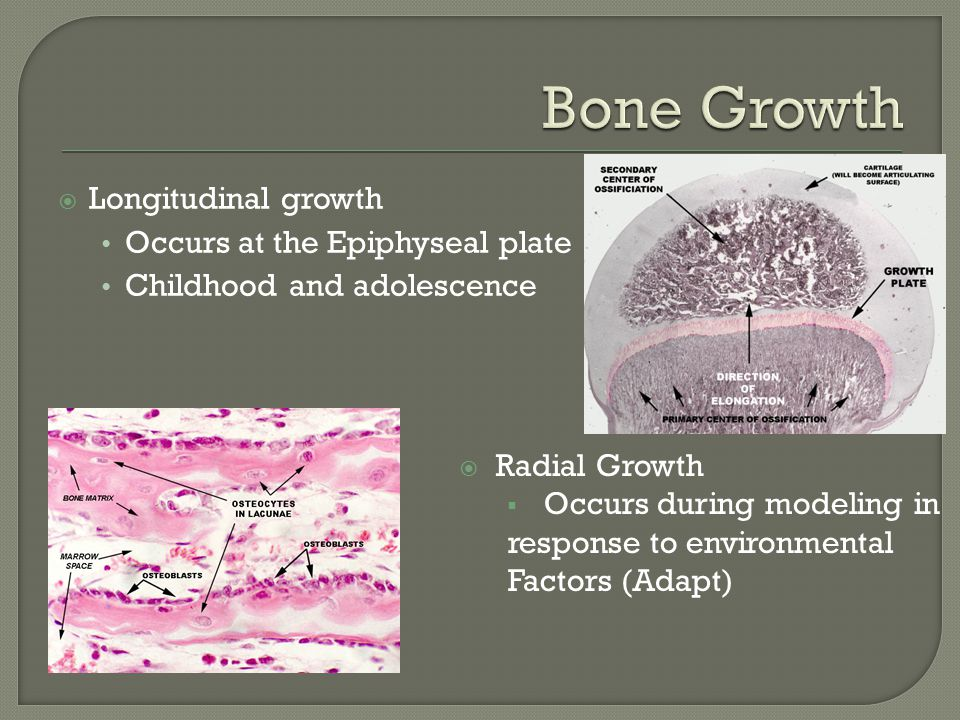  Process of resorbing old bone and forming new  Occurs throughout lifespan Body usually in bone balance In older age negative balance, bones become brittle  Resorption, Reversal, and Formation