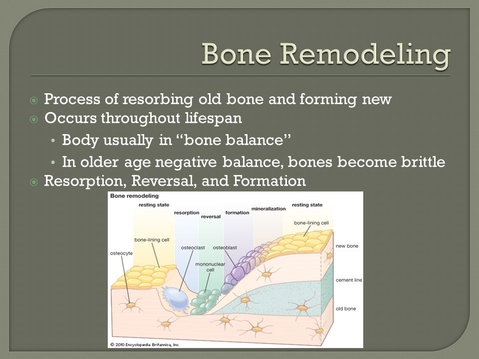  Process of resorbing old bone and forming new  Occurs throughout lifespan Body usually in bone balance In older age negative balance, bones become brittle  Resorption, Reversal, and Formation
