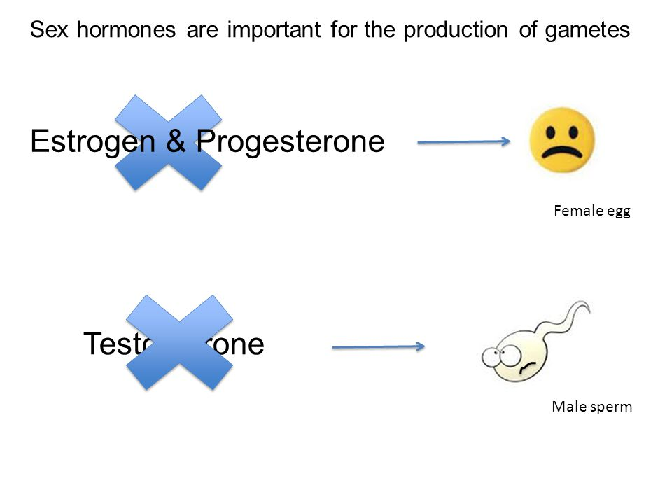Estrogen & Progesterone Testosterone Female egg Male sperm Sex hormones are important for the production of gametes