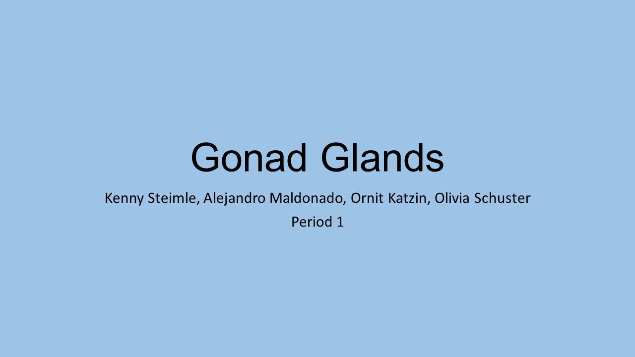 Gonad Glands Kenny Steimle, Alejandro Maldonado, Ornit Katzin, Olivia Schuster Period 1