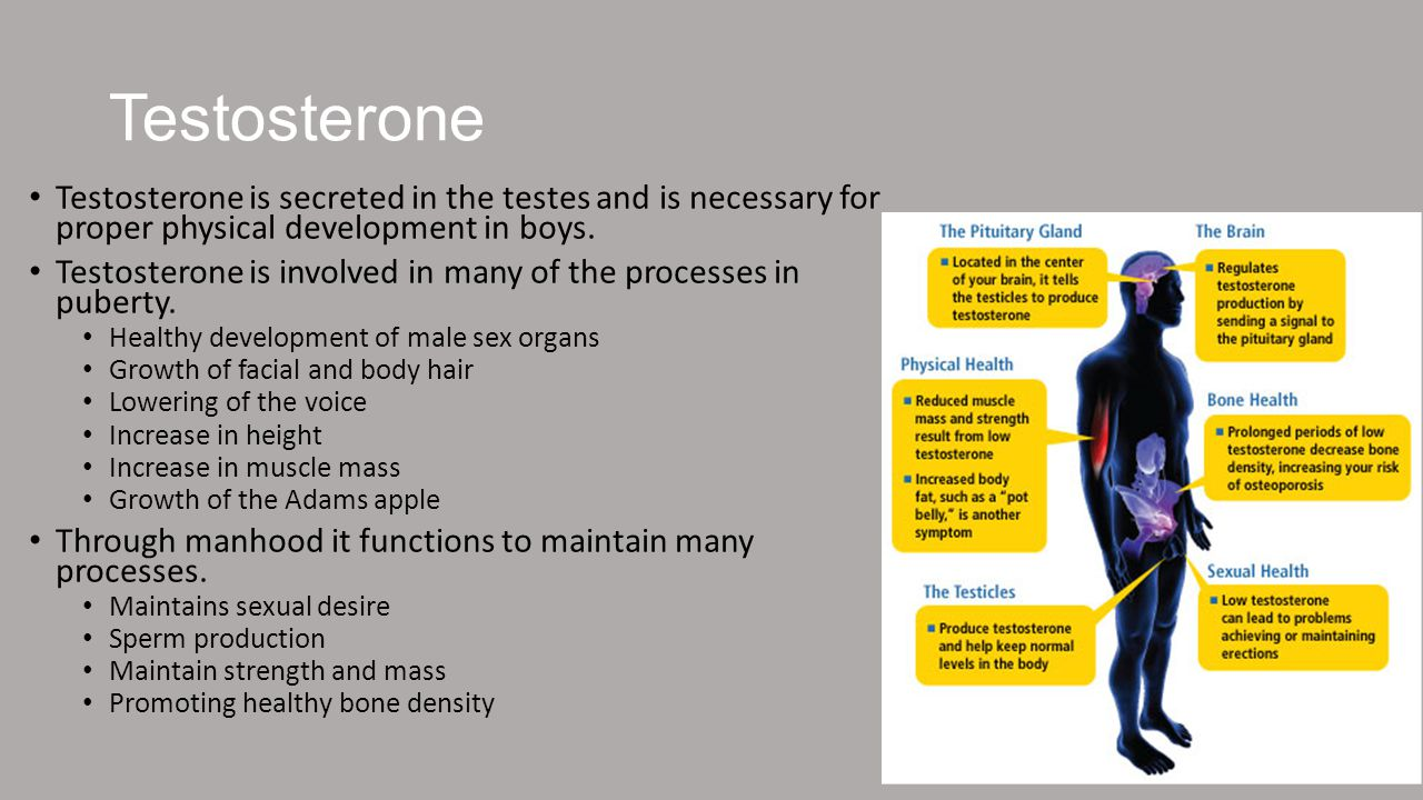 Testosterone Testosterone is secreted in the testes and is necessary for proper physical development in boys.