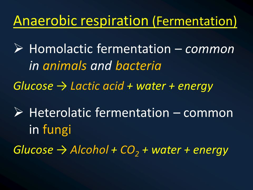 Anaerobic respiration (Fermentation)  Homolactic fermentation – common in animals and bacteria Glucose → Lactic acid + water + energy  Heterolatic fermentation – common in fungi Glucose → Alcohol + CO 2 + water + energy