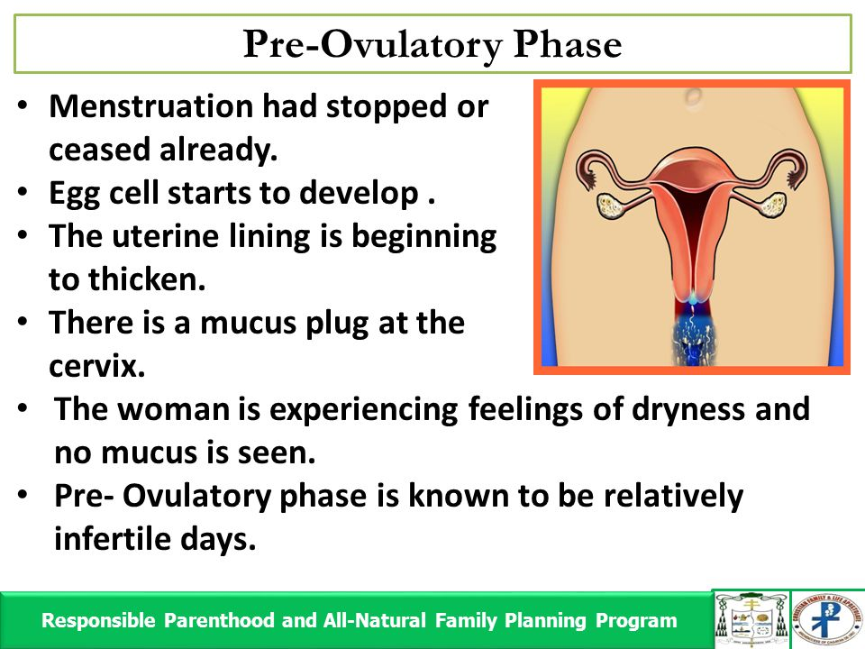 Pre-Ovulatory Phase Responsible Parenthood and All-Natural Family Planning Program Responsible Parenthood and All-Natural Family Planning Program Mens