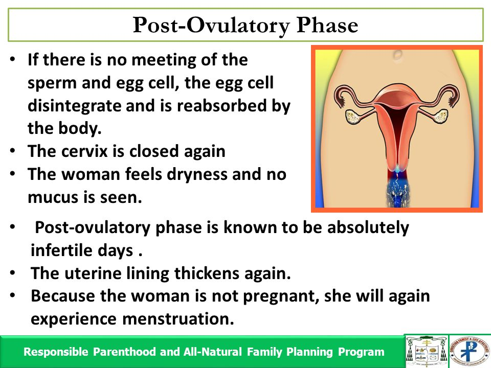 Post-Ovulatory Phase Responsible Parenthood and All-Natural Family Planning Program Responsible Parenthood and All-Natural Family Planning Program If there is no meeting of the sperm and egg cell, the egg cell disintegrate and is reabsorbed by the body.