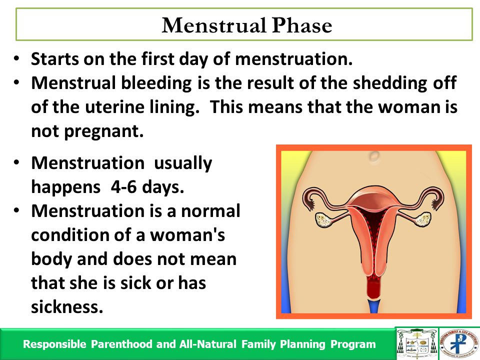 Menstrual Phase Responsible Parenthood and All-Natural Family Planning Program Responsible Parenthood and All-Natural Family Planning Program Starts o